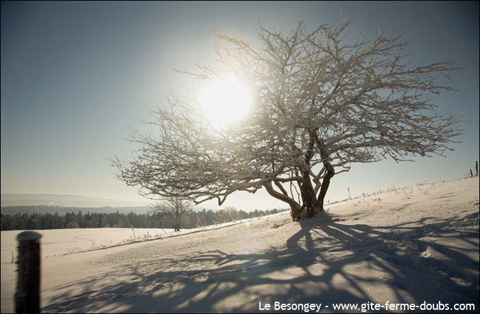 arbre_neige11
