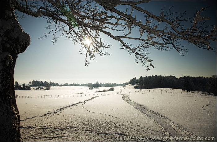 arbre_neige12