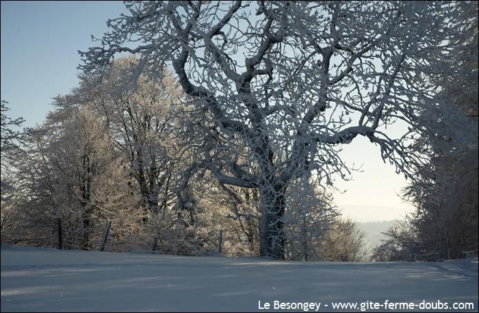 neige_arcsouscicon10